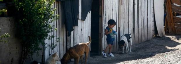 Hallan presencia de plaguicidas en niños de zonas rurales de Talca: uno de estos está prohibido hace 18 años